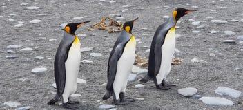 Pingwiny Południowy Gruzja 2018 obraz stock