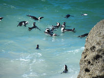 Pingwiny przy głaz plażą, Kapsztad zdjęcie royalty free