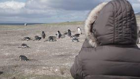 Pingwiny przy Isla Martillo, Beagle Korytkowy Ushuaia Patagonia Tierra Del Fuego Argentyna obrazy royalty free