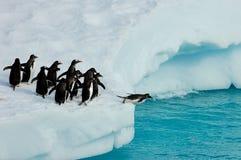 Pingwiny przygotowywający skakać Obrazy Stock