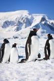 Pingwiny w Antarctica Fotografia Stock