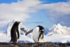 Pingwiny w Antarctica Obrazy Stock