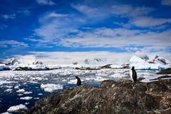 Pingwiny w Antarctica Zdjęcia Royalty Free