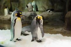 Pingwiny w klauzurze w Hong Kong obrazy stock