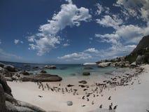 Pingwiny w przylądka punkcie Południowa Afryka Fotografia Royalty Free