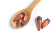 Pinhao - brazilian pine into a spoon. Isolated on white background Stock Image