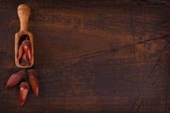 Pinhao - brazylijska sosna zdjęcia royalty free