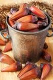 Pinhao - brazylijska sosna w wiadrze Zdjęcie Royalty Free