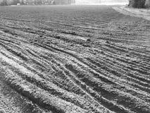 Pinheirais de Tuchola Olhar artístico em preto e branco Fotografia de Stock