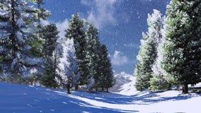 Pinheiral nevado nas montanhas Fotografia de Stock