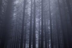 Pinheiral nevoento escuro imagem de stock