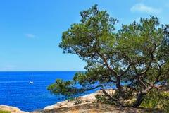 Pinheiro acima do mar fotografia de stock
