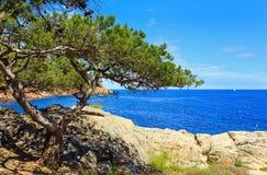 Pinheiro acima do mar imagem de stock royalty free