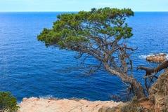 Pinheiro acima do mar fotografia de stock royalty free