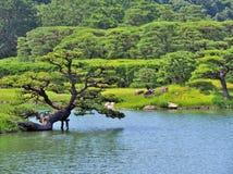 Pinheiro com o lago no jardim de Ritsurin Fotos de Stock Royalty Free
