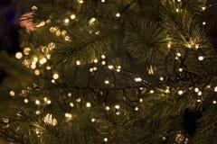 Pinheiro completamente com de luzes Imagens de Stock