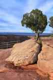 Plantas & árvore   Fotos de Stock Royalty Free