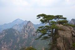 Pinheiro em montanhas de Huangshan na província de Anhui, China imagens de stock royalty free