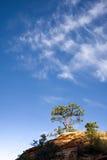 Pinheiro em Rocky Outcrop em Zion foto de stock royalty free
