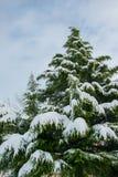 Pinheiro gigantesco coberto com a neve, conceito do feriado de inverno imagem de stock royalty free