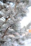 Pinheiro nevado na manhã gelado fotos de stock royalty free