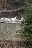 Pinheiro no beira-rio com a ponte de suspensão de madeira Fotos de Stock
