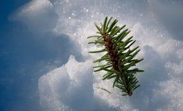 Pinheiro pequeno na neve congelada Imagem de Stock