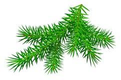 Pinheiro verde do ramo isolado no branco Foto de Stock