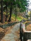 Pinheiro verde e uma maneira de pedra da caminhada Foto de Stock Royalty Free