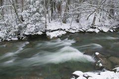 Pinheiros cobertos de neve no lado de um rio no inverno. Fotos de Stock Royalty Free
