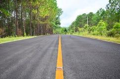 Pinheiros com a estrada fotos de stock royalty free