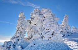Pinheiros congelados sob a neve na montanha fotografia de stock royalty free