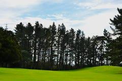 Pinheiros do campo de golfe de Nova Zelândia que alinham a área do limite Imagem de Stock Royalty Free