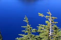 Pinheiros do lago crater Imagens de Stock