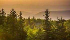 Pinheiros e montanhas distantes no nascer do sol, visto da rocha do urso Imagens de Stock