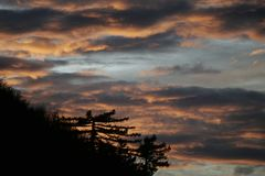 Pinheiros e por do sol dourado Foto de Stock Royalty Free