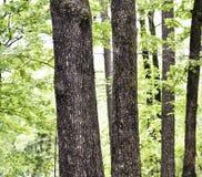 Pinheiros e variedades decíduos variadas na área florestado pequena fotos de stock