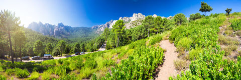 Pinheiros em montanhas de Bavella do colo, ilha de Córsega, França, Foto de Stock