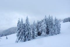 Pinheiros nevados e céu nevoento fotografia de stock