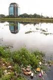 Pinheiros rzeka Fotografia Royalty Free