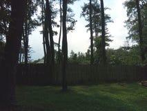 pinheiros tão agradáveis foto de stock