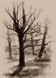Pinho-árvore ilustração stock