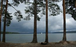 Pinho-árvores em um fundo um lago Fotos de Stock Royalty Free