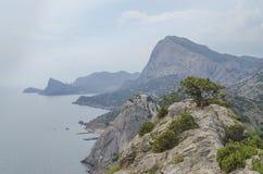 Pinho alto em uma montanha Foto de Stock Royalty Free