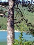 Pinho contra o lago azul Abrau closeup Abrau-Durso, Novorossiysk, o Mar Negro, Rússia Imagens de Stock