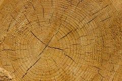 Pinho cortado com círculos e quebras Fundo do pinho Madeira de pinho Comum barato do pinho fotografia de stock
