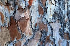 Pinho de madeira da textura da cor foto de stock royalty free