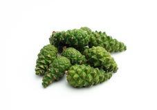 Pinho de Pinecone, verde Fotos de Stock Royalty Free