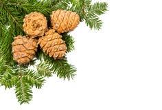 Pinho do Natal e três cones Fotografia de Stock