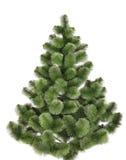 Pinho do Natal sem decoração. Imagens de Stock Royalty Free